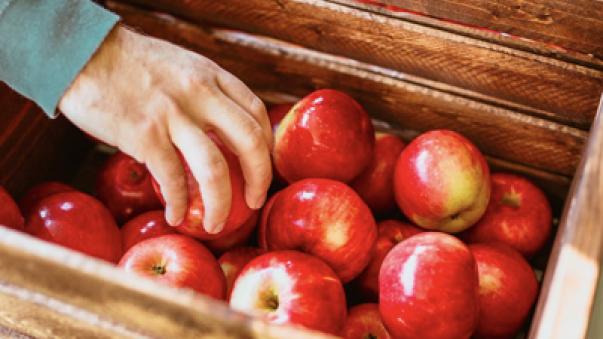 dłoń sięgająca jabłko ze skrzyni