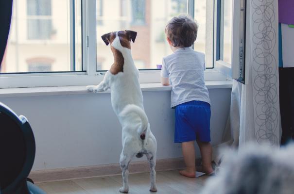 chłopiec i pies wyglądający razem przez okno